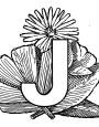 04_Julia_Initialen-Kurs1
